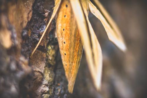 The moth's abdomen