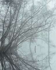 The Eye of Dead Lake (colinbell.photography) Tags: deadlakeloopingtree
