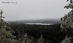 A peaceful landscape (Tarja J) Tags: trees fog finland landscape grey sysmä finnishnature kammiovuori