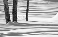 Black Lines (peterkelly) Tags: trip winter shadow bw snow ontario canada tree digital guelph northamerica algonquinpark wintercamping 2015 algonquinprovincialpark celp uppergranddistrictschoolboard communityenvironmentalleadershipprogram