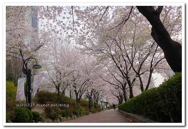 석촌호수벚꽃길06
