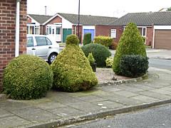 Suburban Rivalry. (ManOfYorkshire) Tags: trees urban colour green rivalry garden bush topiary gardening suburbia cutting gravel skoda privet