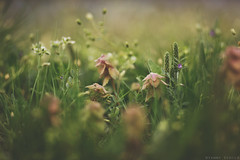 Spring Medley (Tammy Schild) Tags: flowers plants green nature grass closeup canon spring dof bokeh warmth ground 135l