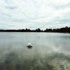 Zuiderplas (Willo Eurlings) Tags: water denbosch plas zwaan zuiderplas