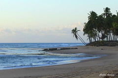 Dois Coqueiros_Taipu de Fora (Carlos Amorim (Camorim10)) Tags: verde praia azul brasil de mar cu bahia amanhecer fora coqueiros taipu