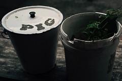 The Pig Bucket (ProSession) Tags: bucket pigbucket monktonwylde