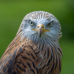 Hmmm, you look tasty (andymulhearn) Tags: kite canonef70200mmf4lusm icbp eos7d2