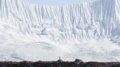 Nepal - Avalanche Wall (sadaiche (Peter Franc)) Tags: nepal cold ice nature wall landscape hiking adventure explore climbing khumbu avalanche
