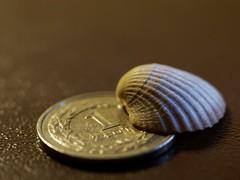 memories for 1 zoty (kinaaction) Tags: coin shell macromondays smallerthanacoin