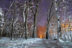 Missing winter already? P1450331 (Vincent Courtemanche) Tags: snow neige fort forest montroyal parcdumontroyal montreal nuit night trees arbres montral 2016 lumixlx3 qubec canada winter hiver vincentcourtemanche