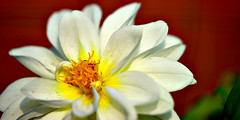 Macro photography using close up lens (pituasutanto) Tags: macro closeuplens sigma 2xmagnification