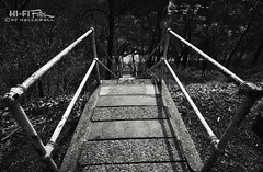 The Most Public Steps in America (Hi-Fi Fotos) Tags: pittsburgh public steps stairs staircase city transportation concrete steel urban hills terrain bw mono blackandwhite nikon d5000 tokina 1120mm hififotos hallewell wide railing steep
