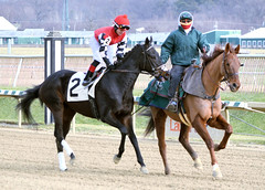 "2015-01-02 (58) r4 Yomar Ortiz on #2 Lovable Lady (JLeeFleenor) Tags: photos photography md marylandracing marylandhorseracing jockeys jockey جُوكِي ""赛马骑师"" jinete ""競馬騎手"" dżokej jocheu คนขี่ม้าแข่ง jóquei žokej kilparatsastaja rennreiter fantino ""경마 기수"" жокей jokey người horses thoroughbreds equine equestrian cheval cavalo cavallo cavall caballo pferd paard perd hevonen hest hestur cal kon konj beygir capall ceffyl cuddy yarraman faras alogo soos kuda uma pfeerd koin حصان кон 马 häst άλογο סוס घोड़ा 馬 koń лошадь yomaroortiz maryland"