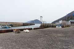 (GenJapan1986) Tags: 2015           japan travel kagawa island nikond610 cat animal sea setoinlandsea sanagiisland