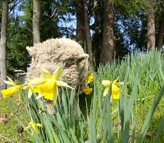 Can Ewe Find... (aprilamb) Tags: