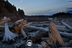 20141203 oly bc (alpinebob2001) Tags: driftwood moonrise washingtonstate olympicnationalpark rialtobeach quillayuteriver