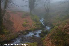 Parque Natural de Gorbeia  2015  #DePaseoConLarri #Flickr  -047 (Jose Asensio Larrinaga (Larri) Larri1276) Tags: naturaleza montaa euskalherria basquecountry 2015 parquenaturaldegorbeia orozkobizkaia parquenaturaldegorbeiagorbea