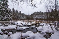 Sub-zero Swamp (awaketoadream) Tags: park trees winter snow ontario canada water river swamp algonquin birch spruce madawaska provincial