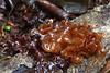 Pruun kõhrik (Tremella foliacea). (Imbi Vahuri) Tags: fungi basidiomycota seened tremella tremellales tremellomycetes kandseened kõhrikseened kõhrikulaadsed kõhrik imbivahuri
