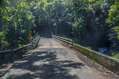 One Lane Bridge Scenic Route off Hwy 19 - Big Island Hawaii (Don Thoreby) Tags: bridge closeup garden botanical hawaii rainforest blossom jungle tropical bigisland thebigisland onelanebridge scenicroute onomea onomeabay