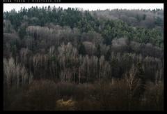 _8B19204 copy (mingthein) Tags: trees winter tree nature zeiss t landscape nikon republic czech availablelight apo carl ming planar otus 1485 onn 8514 d810 thein zf2 photohorologer krivoklatsko mingtheincom mingtheingallery