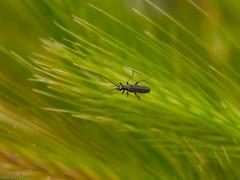 Bicho (Marcelo Esco) Tags: naturaleza macro nature insect bicho insecto
