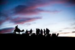 Sunrise camel ride (Amando Filipe) Tags: sahara sunrise desert camels marzouga