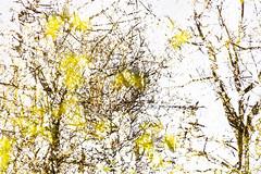 Eleventh Disintegration (pni) Tags: park tree suomi finland leaf helsinki branch centralpark multipleexposure trunk helsingfors tripleexposure multiexposure keskuspuisto skrubu pni centralparken pekkanikrus
