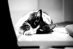 Chill (Little Boy 09) Tags: bw white black cat canon eos chat sleep sigma os chill f28 105mm 60d