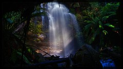 Waterfall (Emily Rainbow-Nordern) Tags: nature river outdoors waterfall tasmania ferns liffy