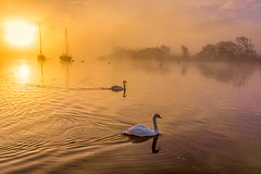 foggy sunrise and swans (Anthony White) Tags: morning winter light sea naturaleza sun sunlight mist art nature weather fog contrast sunrise unitedkingdom sony gb feb sonyalpha orangesunrise