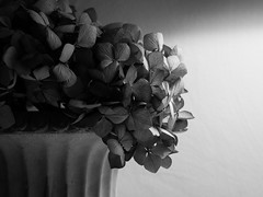 1/365 (jameswrodriguezphotography) Tags: bw plants texture leaves leaf 1365
