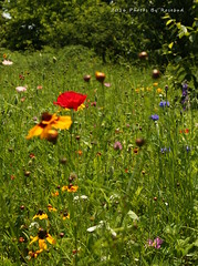 IMG_1427 (Minnie-Rose) Tags: summer graden