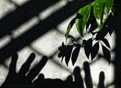 """All the Beauty of Life is made up of Light & Shadow""  - Leo Tolstoy (MacroMarcie) Tags: life light shadow nature leaves wall fence concrete photo hands fuji photographer leo quote x20 selfie tolstoy hss leotolstoy beautyoflife sundaysliders"