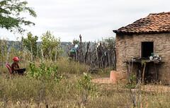 No serto (felipe sahd) Tags: woman brasil pessoa mulher cear senhora nordeste zonaruraldeindependncia sertodecrates
