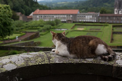 4P7A3569.jpg (n'oras_et_narie) Tags: puydedme auvergne pontgibaud potager donjon chateau chat