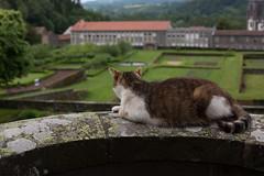 4P7A3569.jpg (oras_et_marie) Tags: puydedôme auvergne pontgibaud potager donjon chateau chat