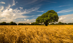 Polarised Field (Rob Pitt) Tags: sky field corn cheshire little wheat dramatic crops filters sutton wirral eastham polarising ellesmereport 750d