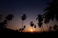 (Benoms) Tags: benoms benom nak colima mxico atardecer palmeras cielo paisaje sunset landscape trees palms palm palmtrees contrastes naturaleza nature tropical paisajetropical palmas coquimatln lapiedraacampanada