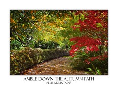 Path in autumn filled with dappled light and colour (sugarbellaleah) Tags: autumn trees light red orange plants sunlight green fall nature beautiful leaves yellow landscape gold maple flora pretty colours path tranquility special walkway hedge serenity environment birch deciduous botany dappled pathway