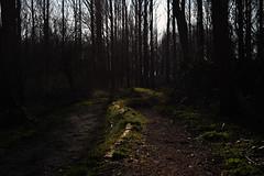 bospad (Remke Luitjes) Tags: bomen nederland wolken zoetermeer gras zon schapen straat