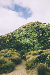 Trail to Karekare Beach (DeepLovePhotography) Tags: newzealand karekarebeach deeplovephotography seanhelmn