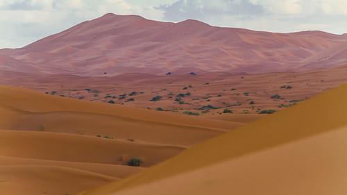 Wüstenstimmung am Abend
