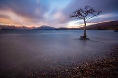 Milarrochy Bay (Andy3168) Tags: longexposure sky tree clouds scotland movement solitude lochlomond milarrochybay