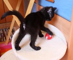 Gata Pucca (6) (adopcionesfelinasvalencia) Tags: gata pucca