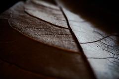Leaf's old skin [explored 16/05/16] (Guigou1900) Tags: macro dark leaf dreams macromondays