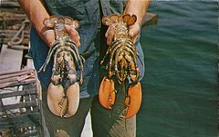 Did You Ever See The Under Side Of A Live Maine Lobster? (SwellMap) Tags: architecture vintage advertising design pc 60s fifties postcard suburbia style kitsch retro nostalgia chrome americana 50s roadside googie populuxe sixties babyboomer consumer coldwar midcentury spaceage atomicage