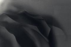 Through Frosted Glass Darkly (JeffStewartPhotos) Tags: blackandwhite bw plant toronto ontario canada window leaves dark blackwhite stclair photowalk toned frostedglass torontophotowalk topw torontophotowalks topwsc
