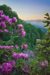 New River Gorge in Bloom (reflectioninapool) Tags: bridge pink flowers light sunset sky mountains green nature architecture forest outdoors us day purple unitedstates suspension westvirginia valley rhododendron bloom gorge blooms overlook rectangle appalachia fayetteville newriver rhododendrons catawbiense