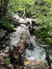 At the Falls (chickadee23) Tags: flowers mountains utah hiking trails waterfalls views benlomond ogden waterfallcanyontrail